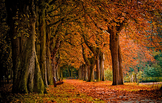 Stiže jesen Autumn_011