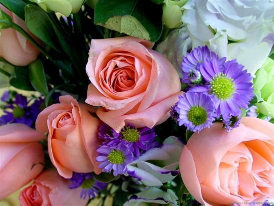 ���� ����� �������� flowers_25.jpg