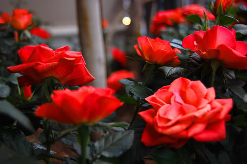 ���� ����� �������� flowers_69.jpg