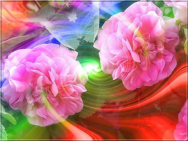 ���� ����� �������� flowers_73.jpg