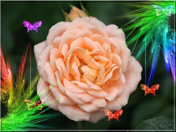 ���� ����� �������� flowers_74.jpg