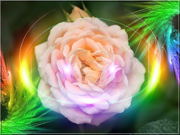 ���� ����� �������� flowers_77.jpg
