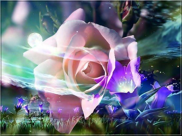 ���� ����� �������� flowers_78.jpg