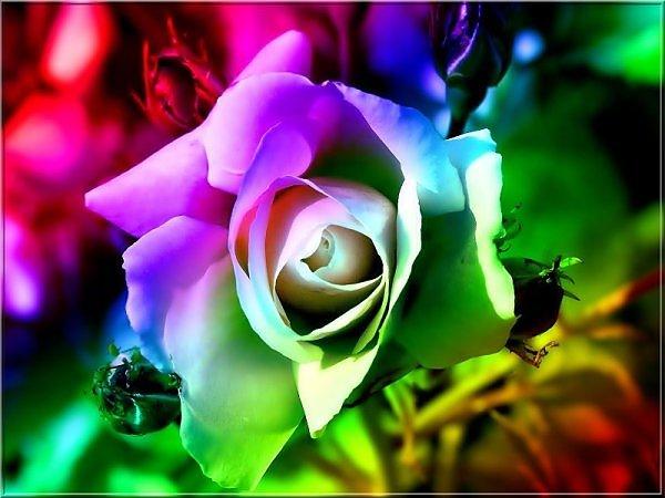 ���� ����� �������� flowers_79.jpg