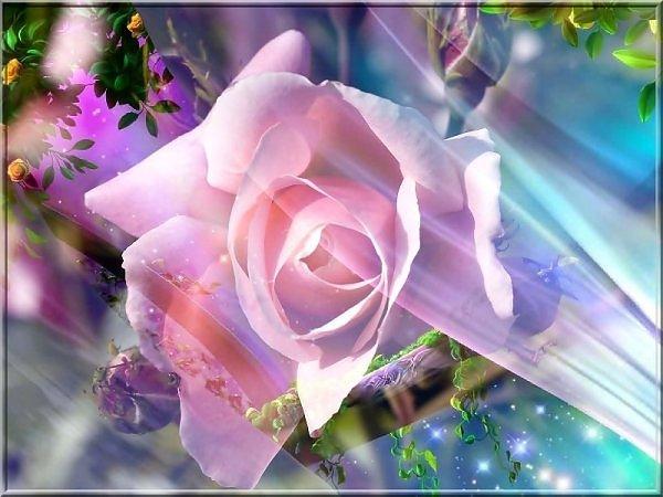 ���� ����� �������� flowers_80.jpg